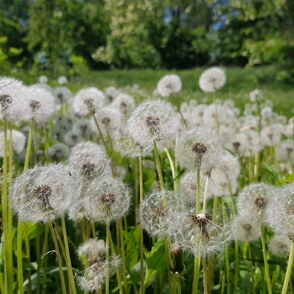 Naturtagebuch für Kinder: Der Sommer