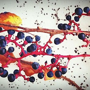 Naturtagebuch für Kinder: Der Herbst